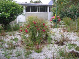 Rear of garden from rose bush before work