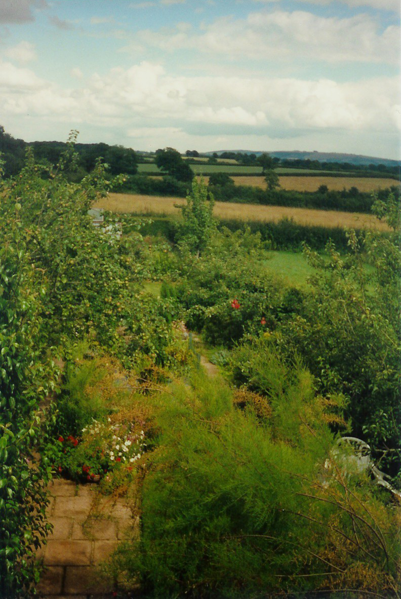 Our Dorset Garden - view from bedroom
