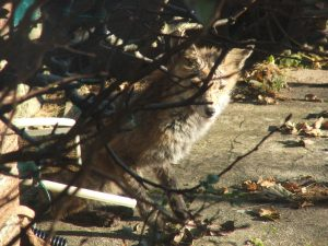 Birds, bugs and wildlife - Wildlife