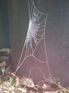 Birds, bugs and wildlife - Bugs